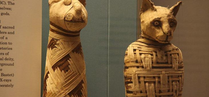 Você sabia que os egípcios mumificavam até gatos?
